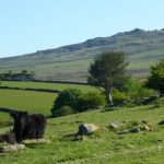 Holidays Dartmoor nr Tavistock. Caravans, Camping & Holiday Cottages
