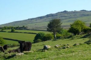 Dartmoor Camping
